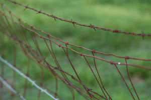 rusty wire for top of cage guerrilla cannabis growing
