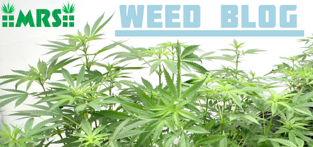 visit the mrs weed blog