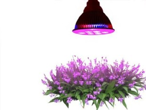 small LED grow light