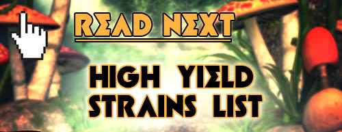 read next high-yield strains list