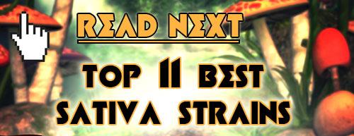 Read next: Top 25 Best Sativa Strains