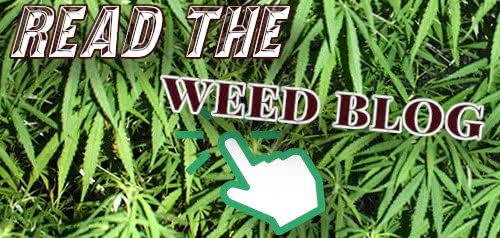 Continue reading on the MoldResistantStrains.com Weed Blog