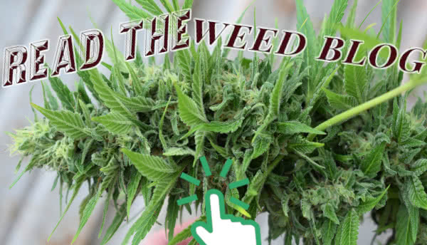 Learn more on the MoldResistantStrains.com Weed Blog