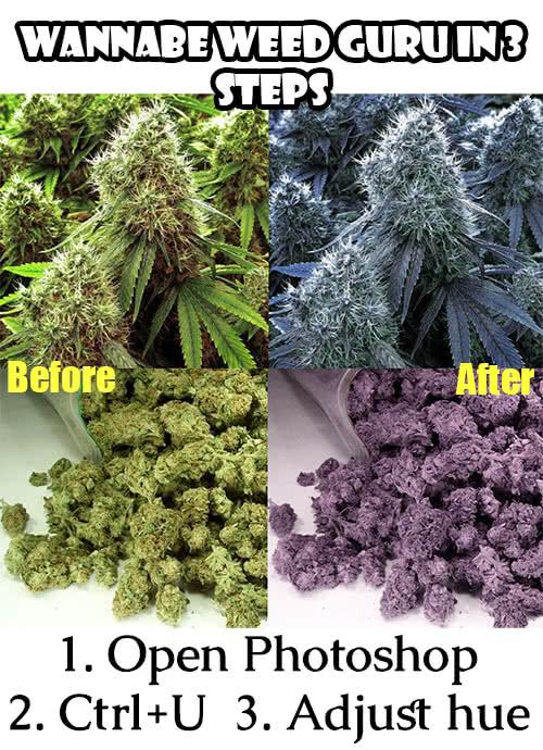 exposing fake weed photos online