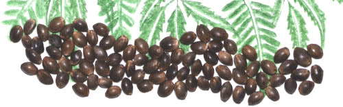 marijuana seeds for sale Hawaii