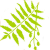 neem-oil-powdery-mildew