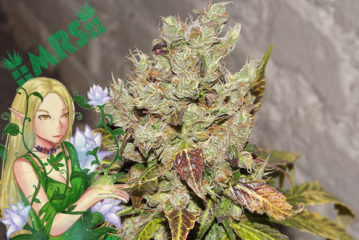 Top 11 Best Sativa Strains and Seeds for 2017 UPDATED