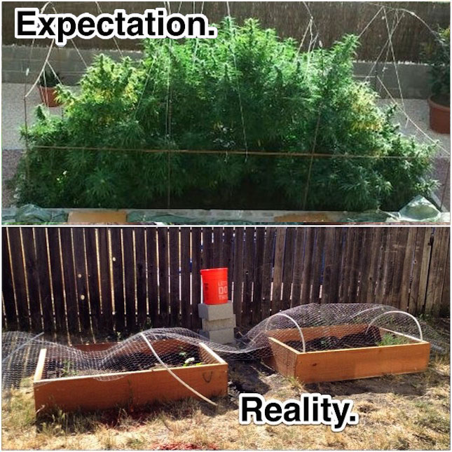 Weed plant fail image