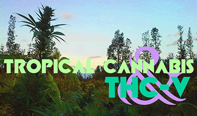 Tropical Cannabis and THCV
