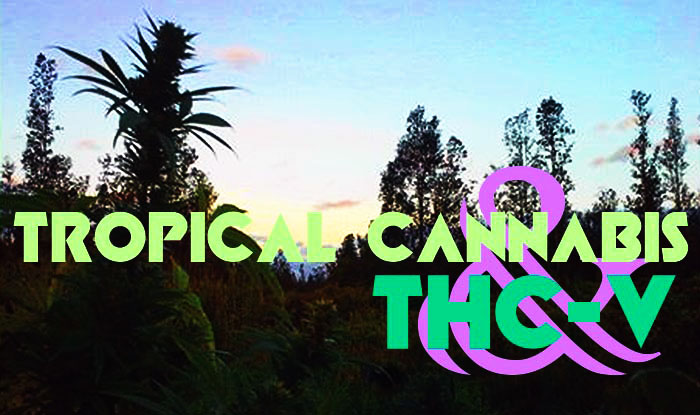 tropical cannabis thcv