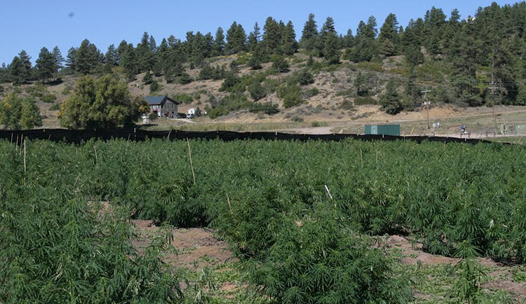 Colorado CBD farm