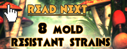 Read next: 8 Resilient Mold Resistant Strains