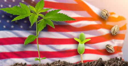 Autoflower, Regular and Feminized Cannabis Seeds in the United States