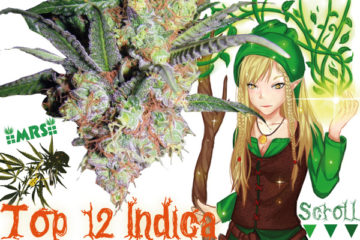 Top 12 Heavy Indica Dank Strains From Seed