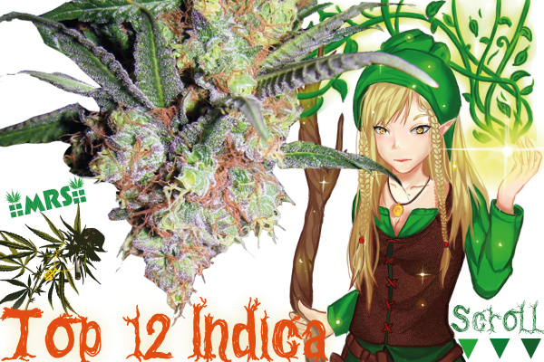 Top 12 Dank Heavy Indica Strains From Seed