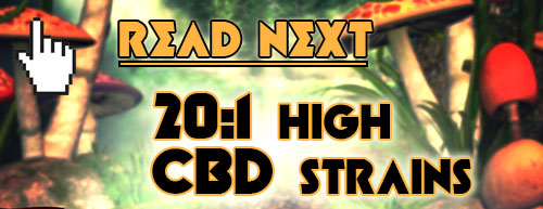 Read more: High CBD Strains