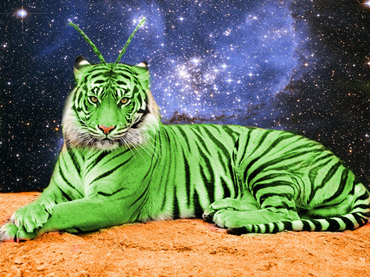 Crouching Tiger Hidden Alien cannabis strain