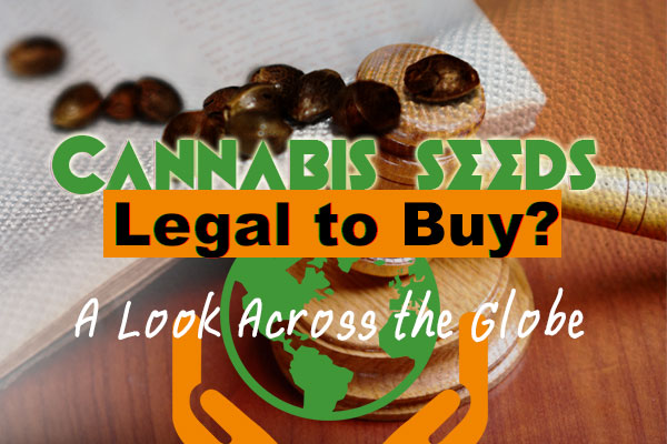 Cannabis Seeds – Legal To Purchase? A Look Across the Globe