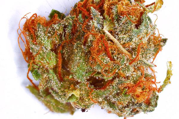 Charlie Sheen weed strain haha