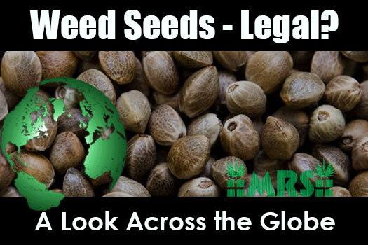 Weed Seeds – Legal To Purchase? A Look Across the Globe