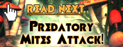 Read next: Preadatory Mites