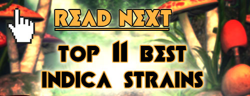 Read next: Top 25 Best Indica Strains