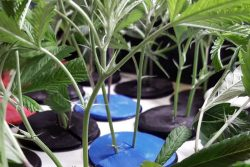 Top 3 Best Aeroponic Cloning Machines For Sale Reviewed + FAQ