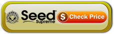 bubble-gum-auto-seeds-buy-at-seed-supreme