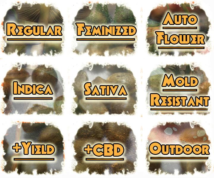 Mold Mildew Resistant Strains, Cannabis Seed, Marijuana