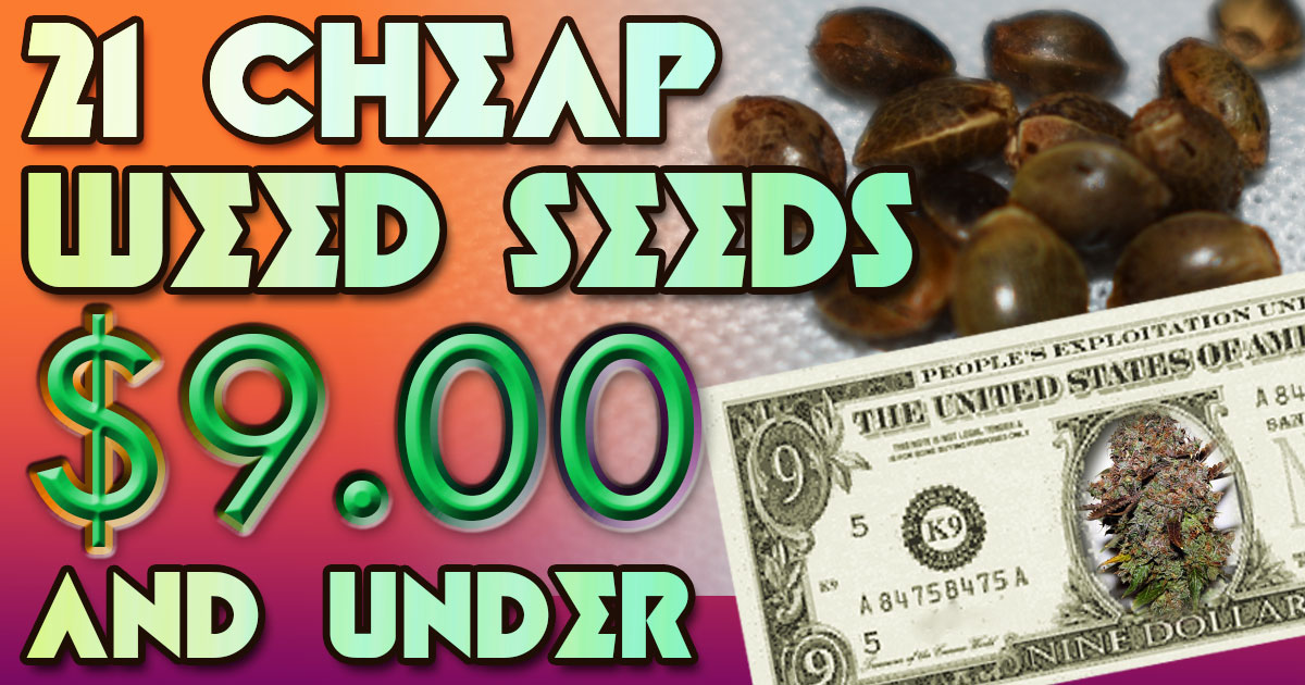 21 Cheap Weed Seeds $9 and Under | Mold Resistant Strains