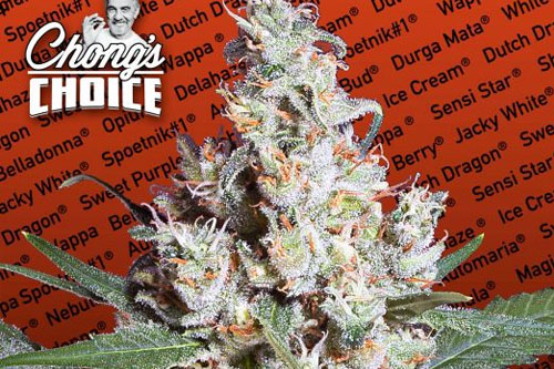 L.A. Amnesia Feminized Seeds