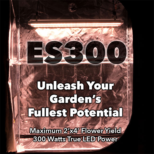 Buy the Electric Sky ES300 for sale reviewed