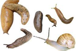 Most Effective Slug Baits To Kill Garden Slugs & Snails (Organic)