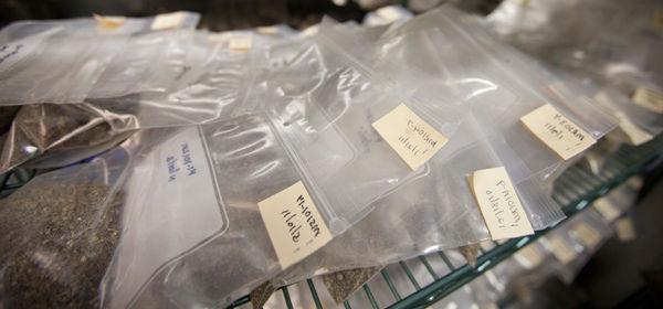 storing fresh mycorrhizal fungi inoculant