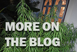 More on the Weed Blog