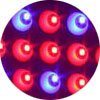 red blue ratio led grow light