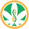 Marijuana Seeds Genetics