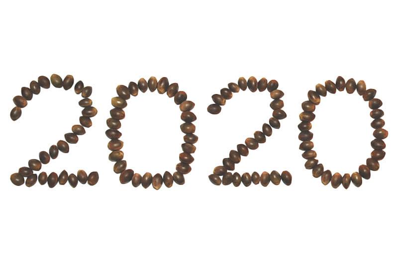 20 New Marijuana Strains for 2020