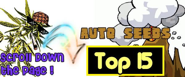 Top 15 Best Autoflowering Seeds