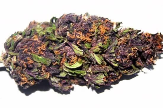 Purple Haze: rich sativa strain trippy