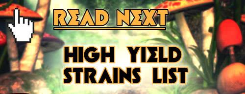 Read Next: List of the Highest Yielding Marijuana Strains