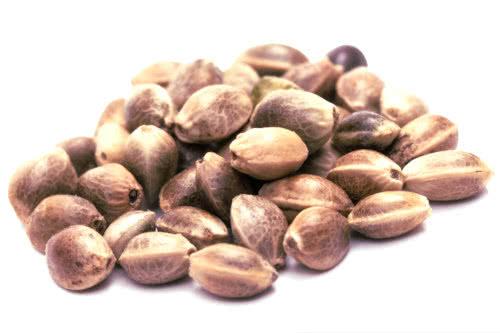 Rasoli reg cheap marijuana seeds