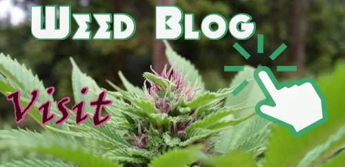 Visit the moldresistantstrains.com weed blog